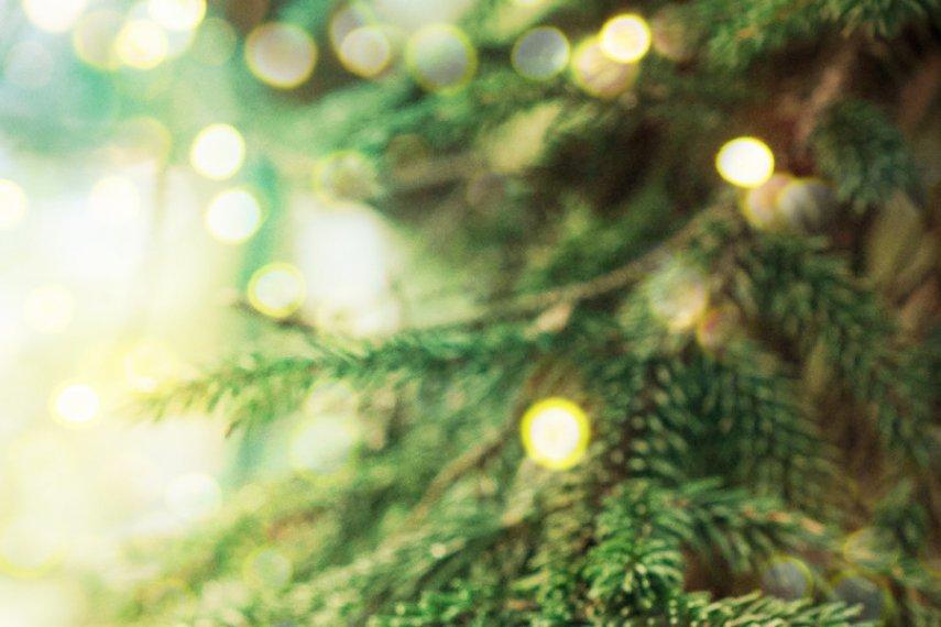 MSUFCU Giving Tree